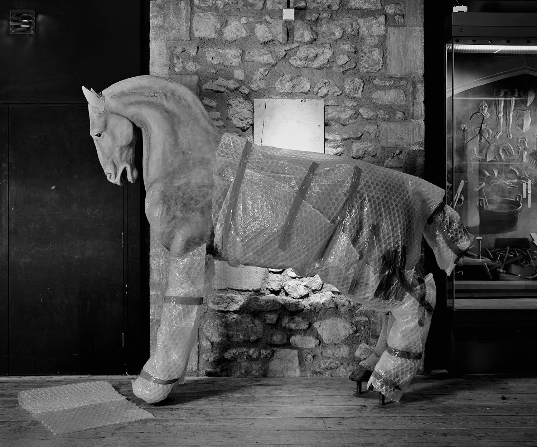 Joubert's Horse
