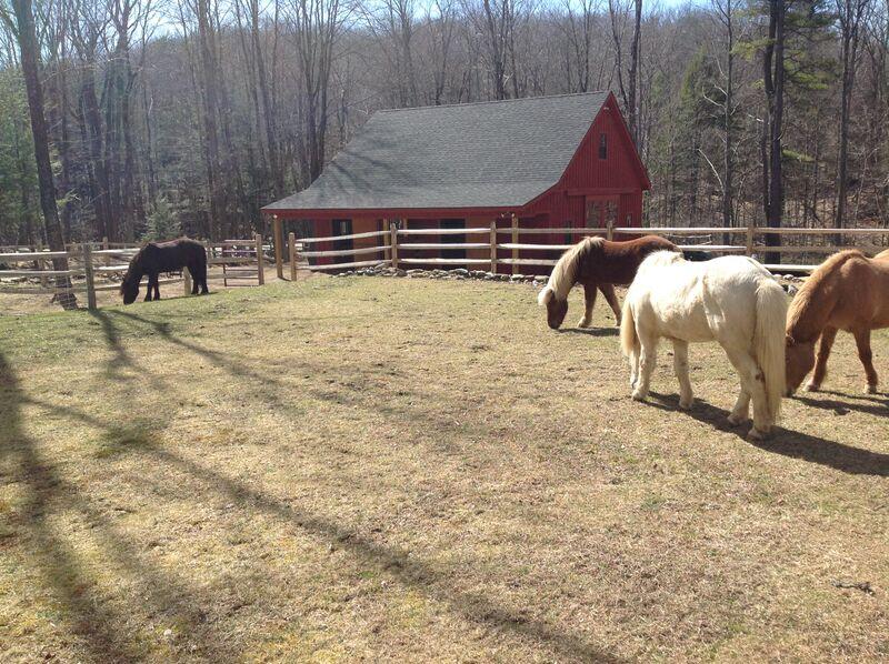 Facility horses on lawn.jpg