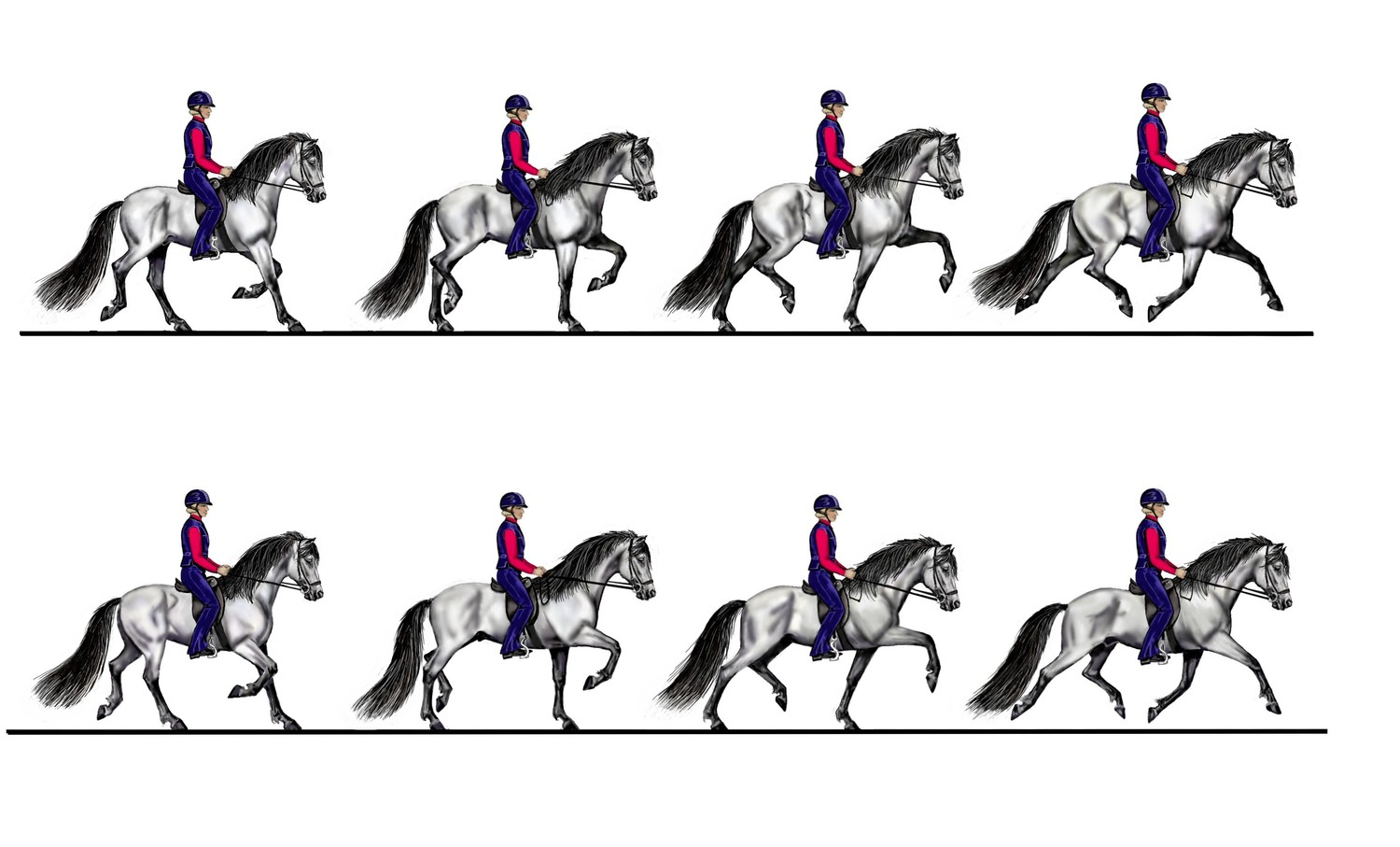 The gait sequence in trot - drawing by Susan Harris