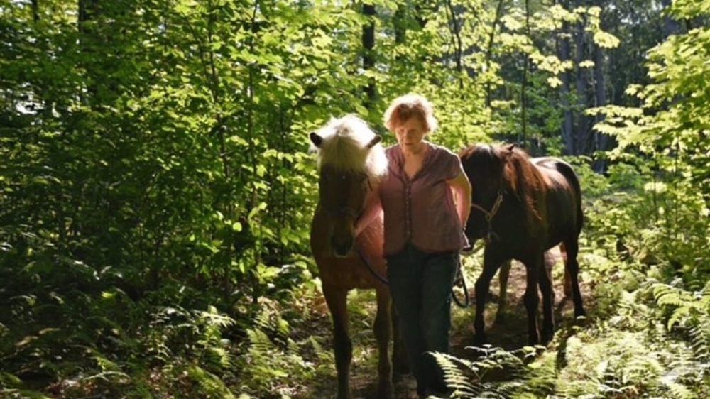 Participant quote:  Morning at Solstice Farm. Beautiful light. Horse kisses...bird houses. Hidden paths.