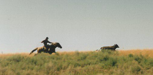 Chris Black Chasing Strays – From Tim Hayes Collection