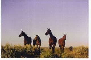 Horses Don't Get Divorced. Photo Tim Hayes Collection.