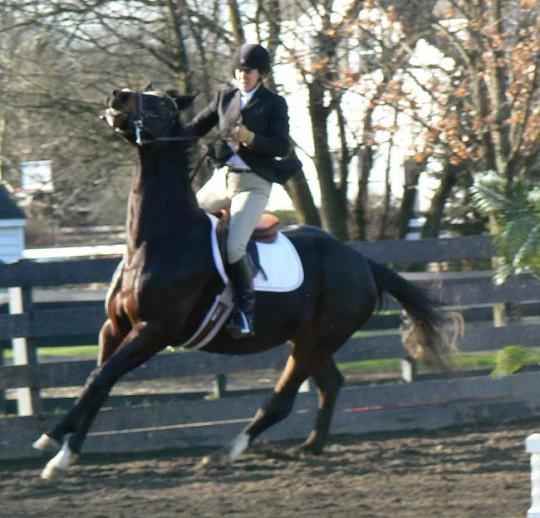 Human fear increases horse fear.