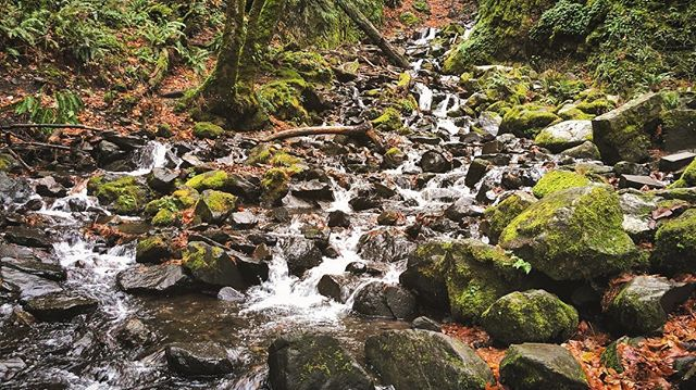 Escape the city.  Find a quiet place in nature. Sit and listen to the stillness, the winds in the trees, the water flowing. - - - - #getoutside #escapethecity #stillness #nature #naturelovers #naturephotography #forest #wilderness #creek #rocks #moss #trees #evergreen #cascade #cascadia #gorge #columbia #columbiariver #columbiarivergorge #landscape #landscapephotography