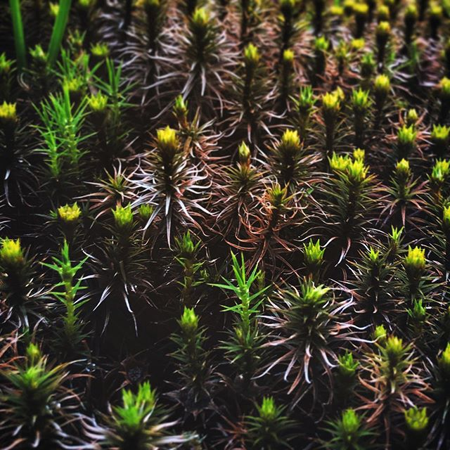 #tinyplants