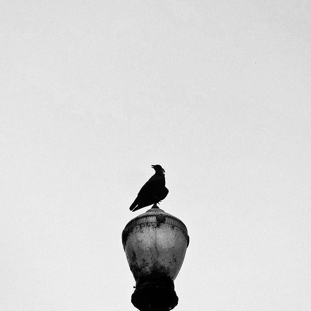 Lonely Raven . . . . . . . . #lonely #raven #sillouette #lamppost #urban #urbanlandscape #waterfront #publicpark #portland #oregon #willamettevalley #willamette #river #sky #blueskye  #blackandwhite #blackandwhitephotography #monochrome #moody #strong #foreboding