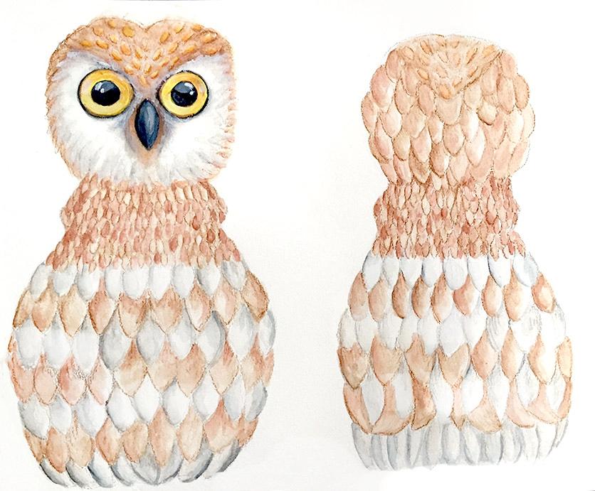 owl draft (1).jpg
