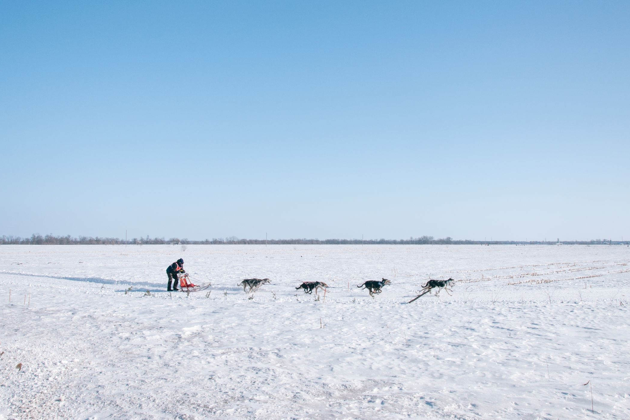 Swedish Lapland Tours | Dog Sledding in Kiruna, Sweden 4