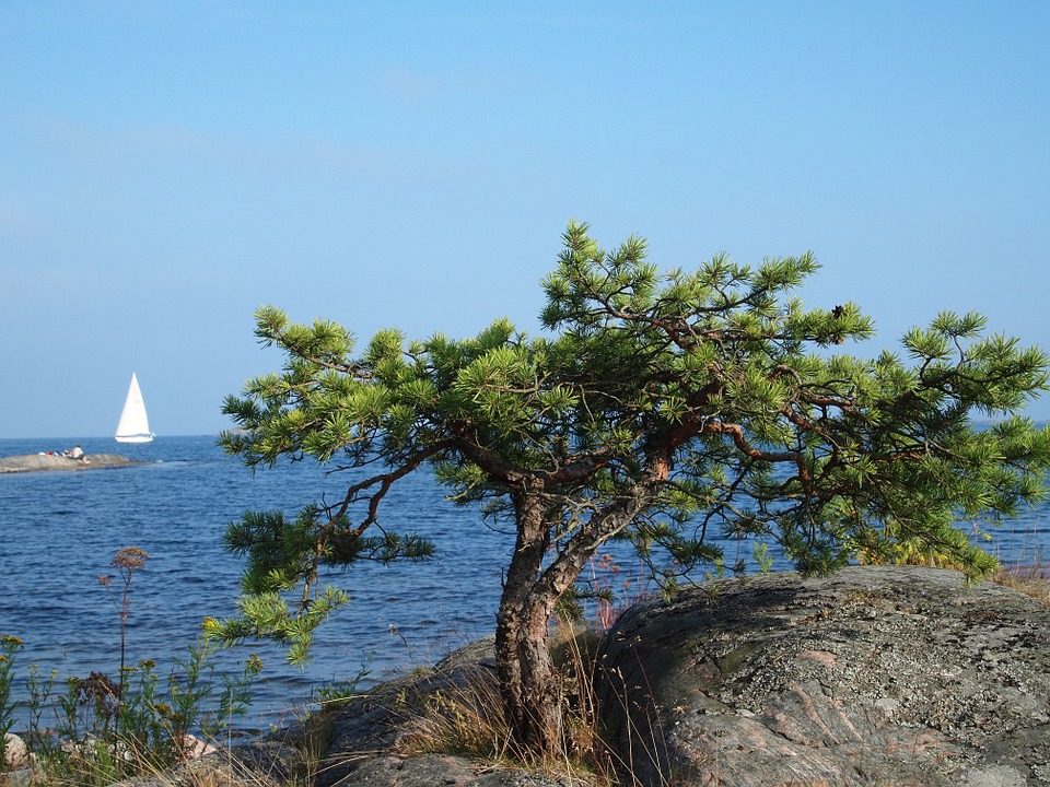 Stockholm Archipelago Kayaking 1 day 3