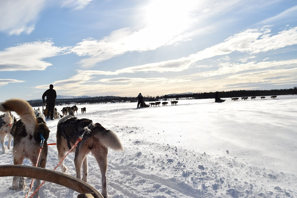 Swedish Lapland Tours | Dog Sledding in Kiruna, Sweden 5