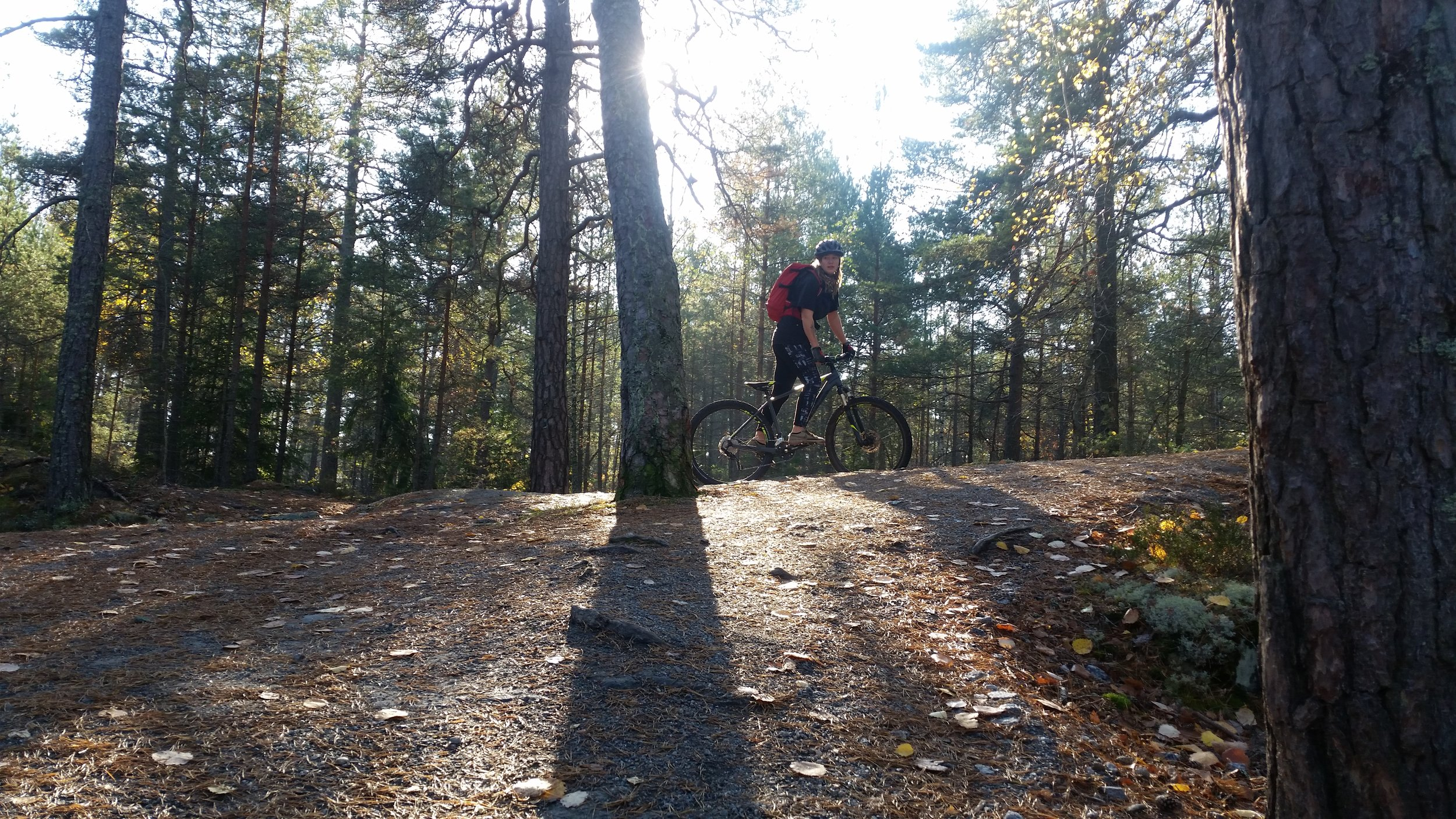 Mountain Biking in Stockholm Forests Guided Tours
