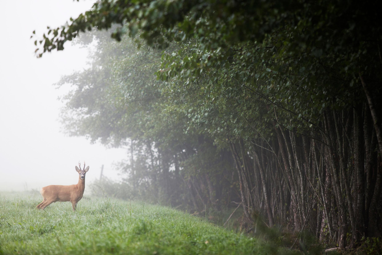 melker_dahlstrand-nature_reserve-3921.jpg