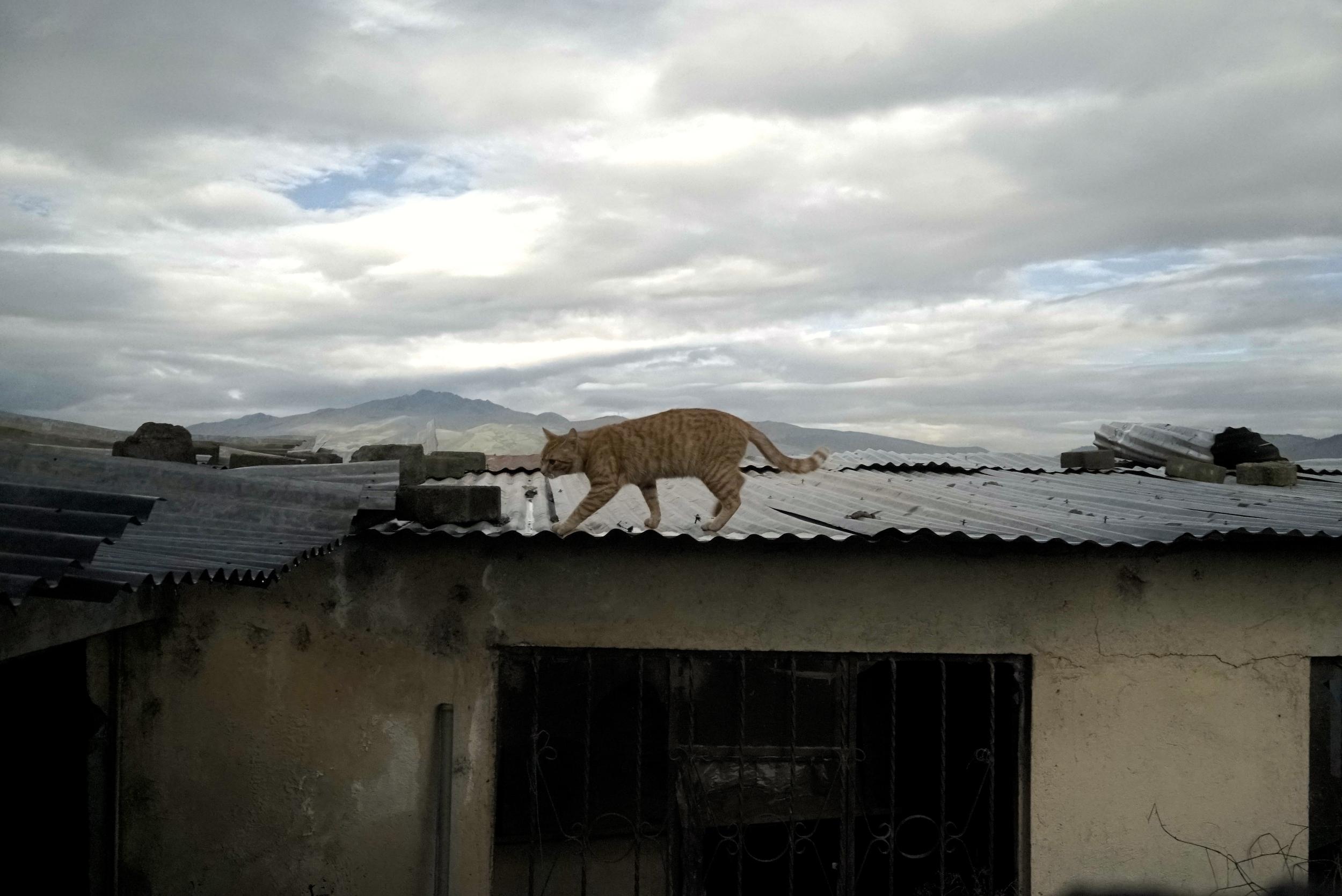 Pancho sur le toit.jpg