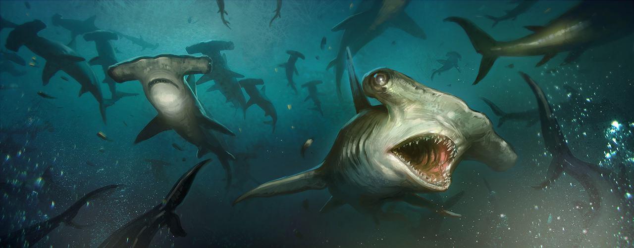 03_IMG_2864 Shark Swim-WEB.jpg