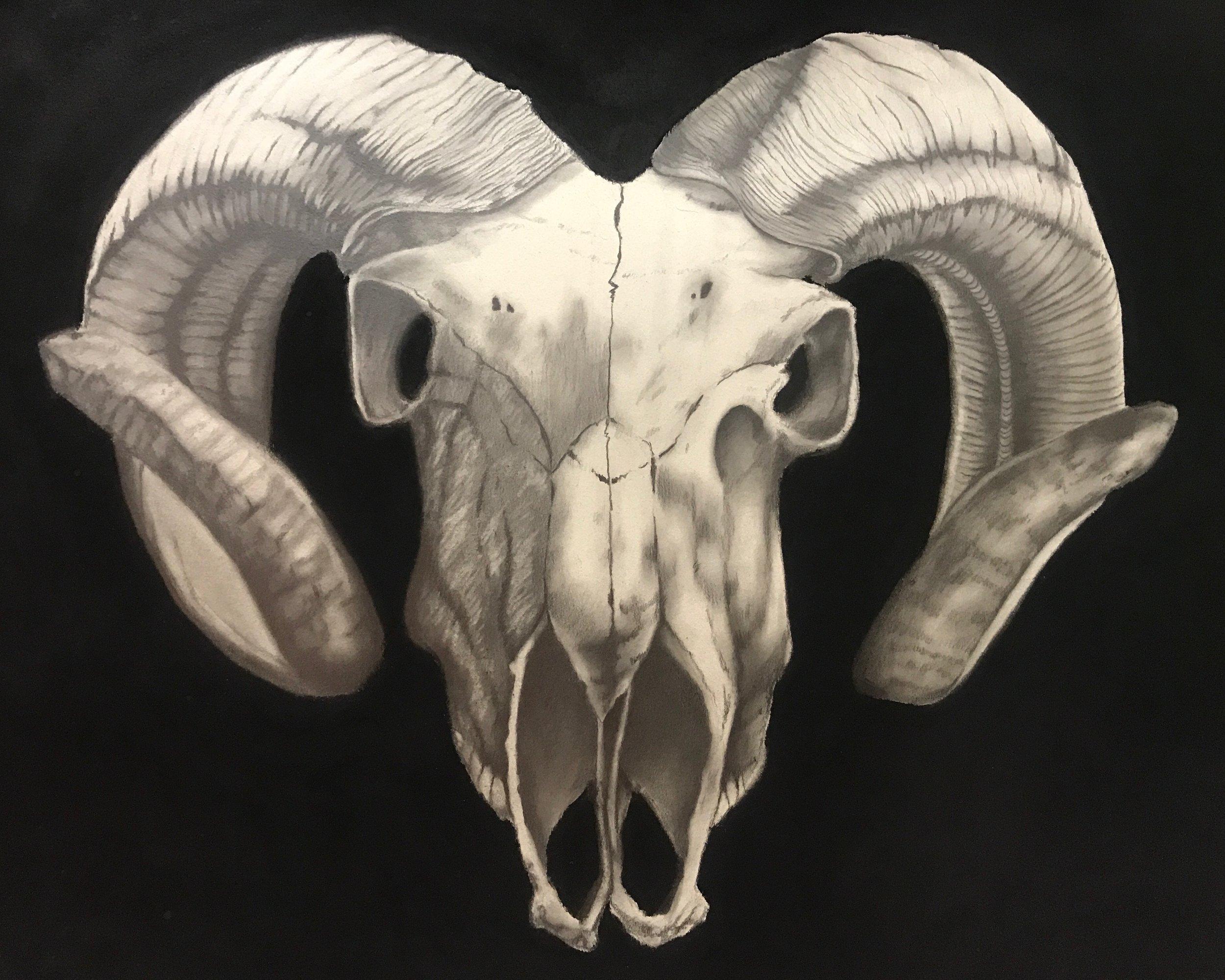 Ram Skull Study