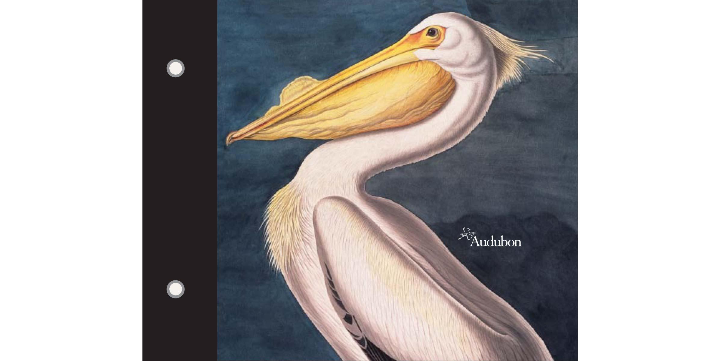audubon_case-cover-wide.jpg