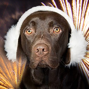 fear-of-fireworks.jpg