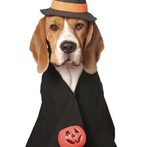 pet-safety-halloween.jpg