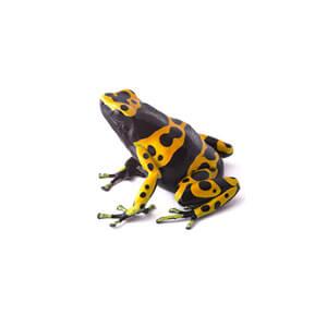 Dart Frog Care