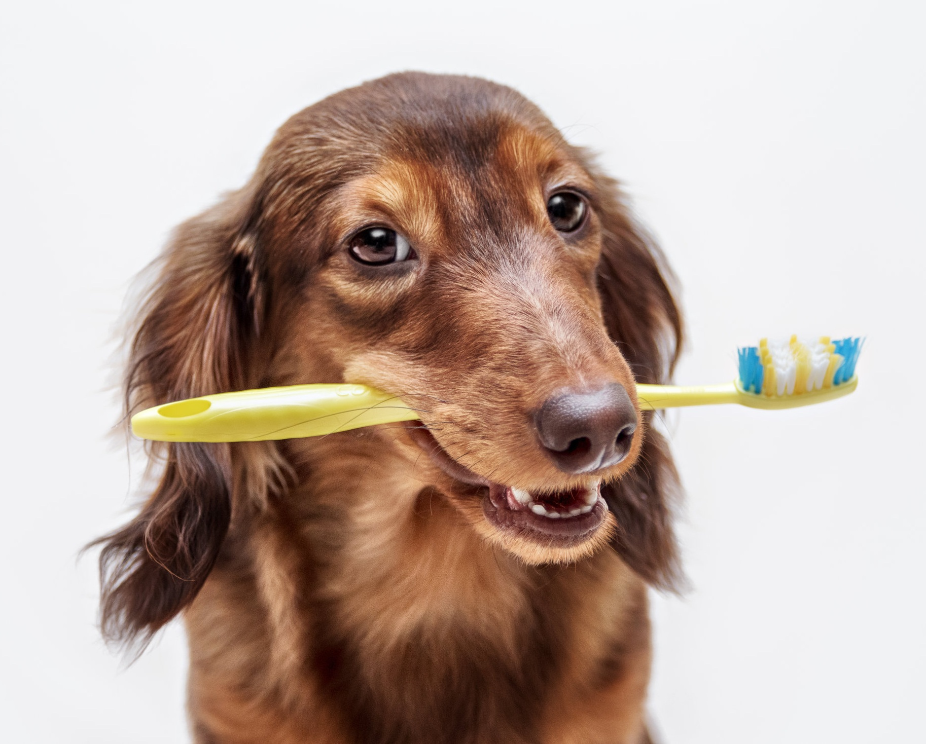 Experienced veterinarians for dog and cat dental
