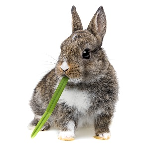 Rabbit Food Guide