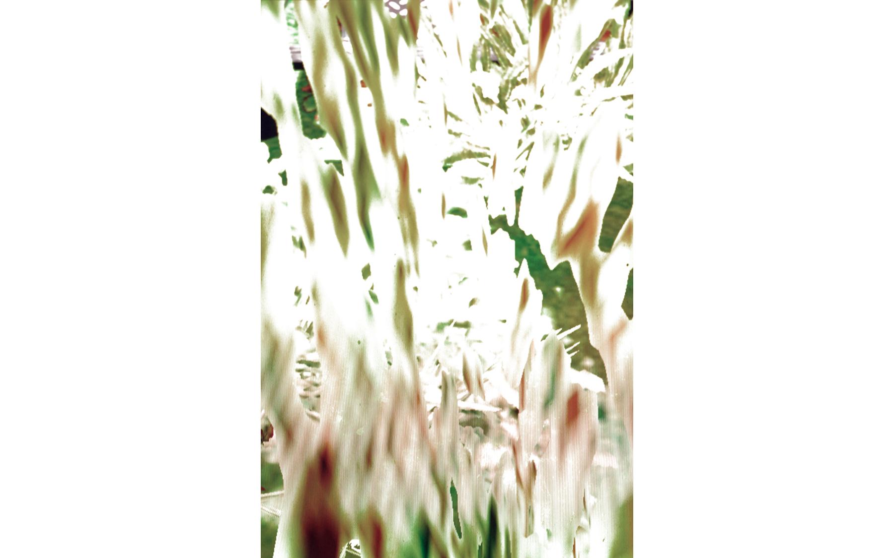 Peeling Grass , 2016 archival inkjet print image size: 22 x 17''
