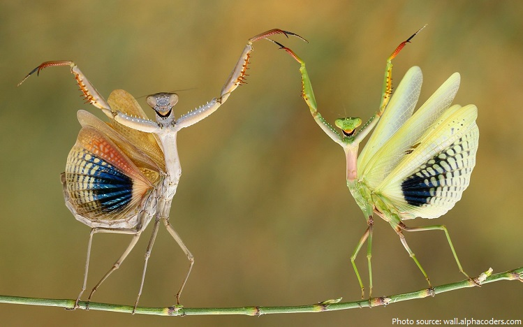 praying-mantis-wings.jpg