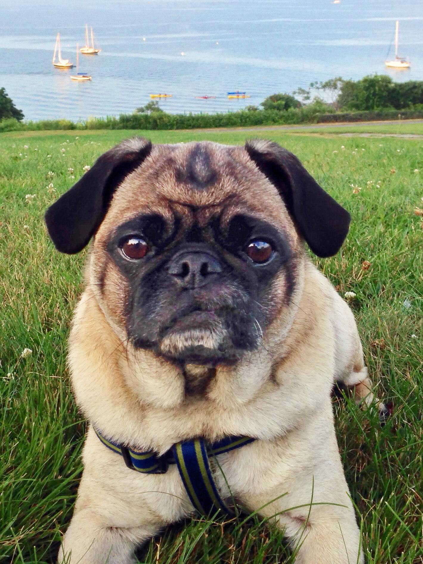 Winston (a.k.a. PugChop), Moderator