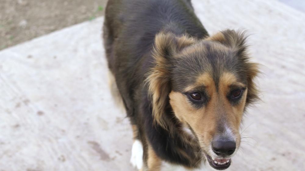 Dog Rescue Shirt Club - Tripp Films