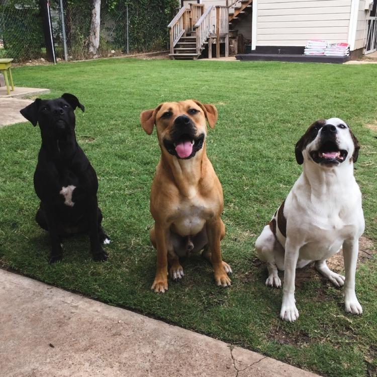 Pups - Tripp Films