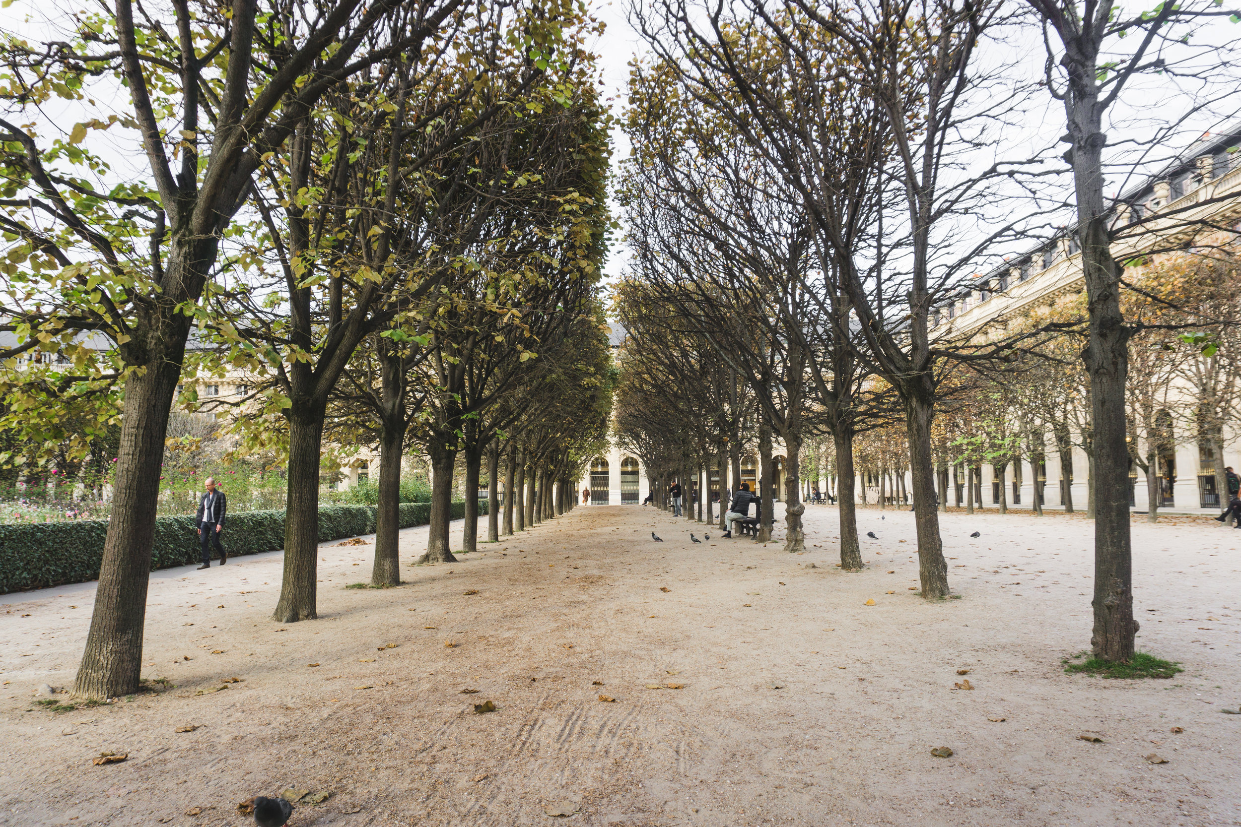 Tripp Films_Paris_Jardin du Palais Royal_Pathway.jpg
