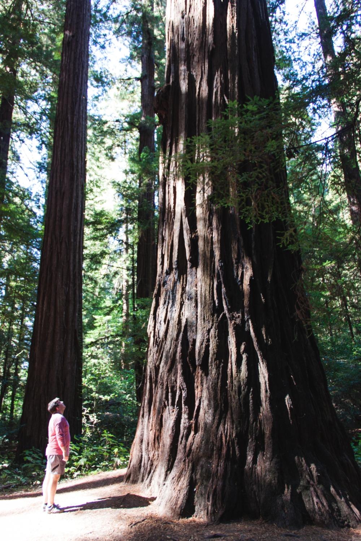 West Coast Road Tripp_Tripp Films_Redwoods_Rebrand Inspiration