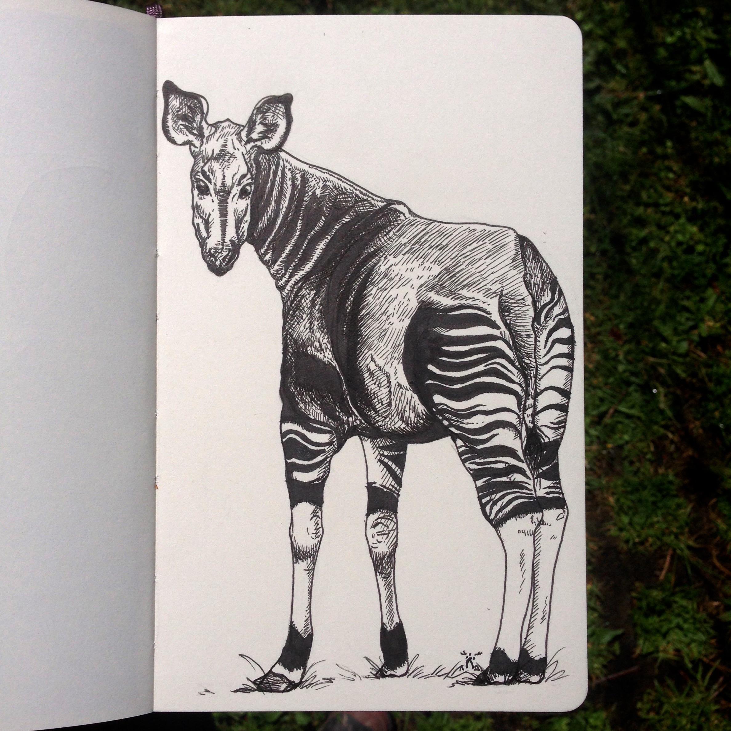 Day One - Okapi