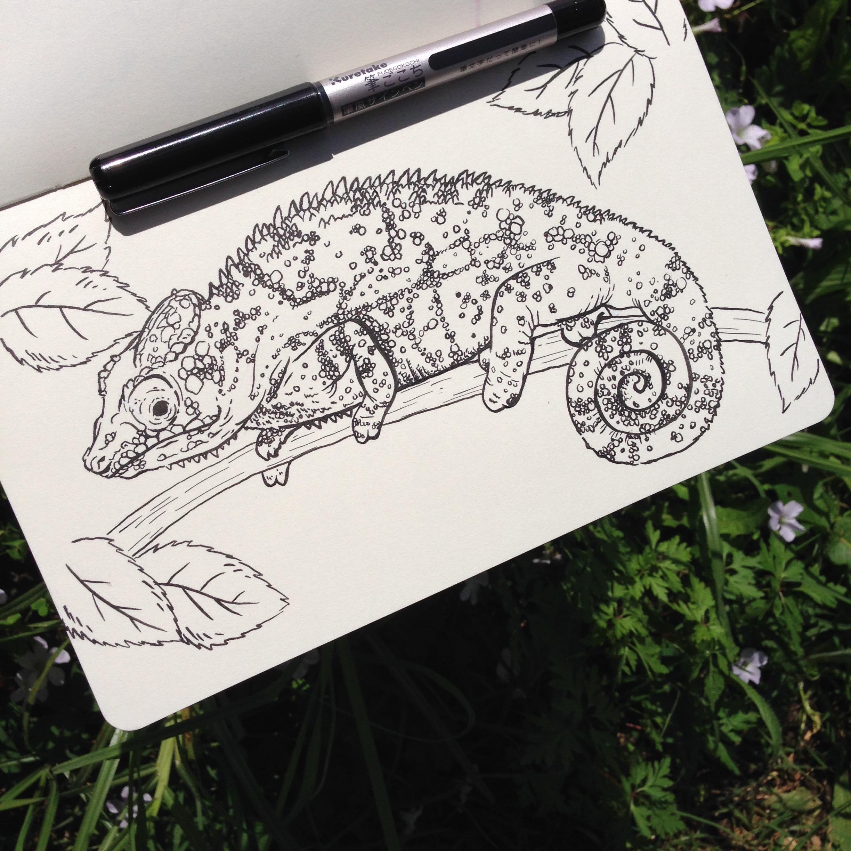 Day Four - Chameleon