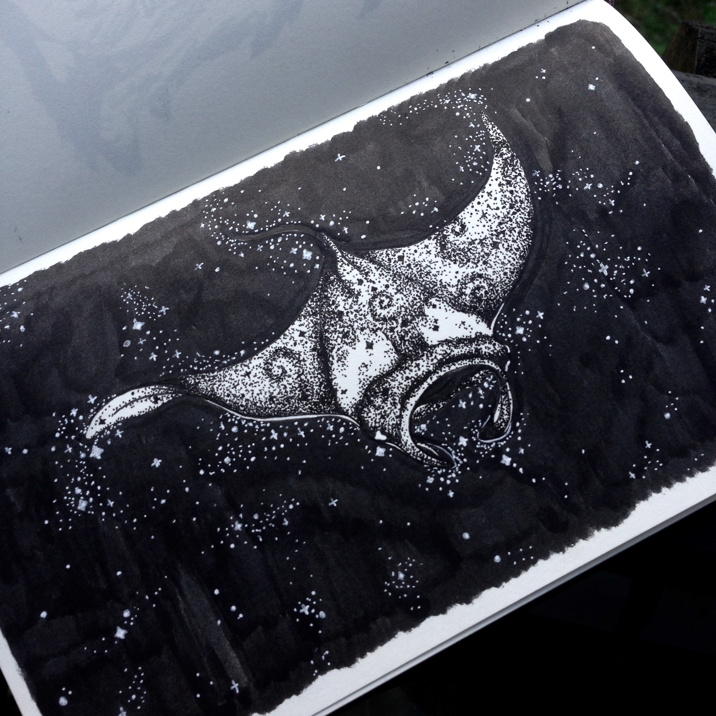 SOLD - Day Eight - Manta Ray