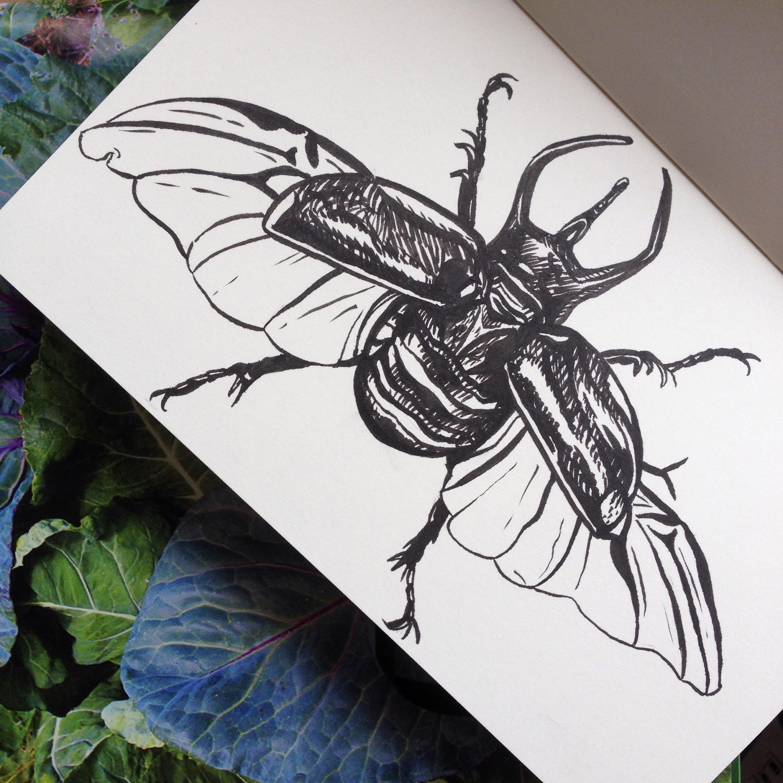 Day Nine - Rhino Beetle