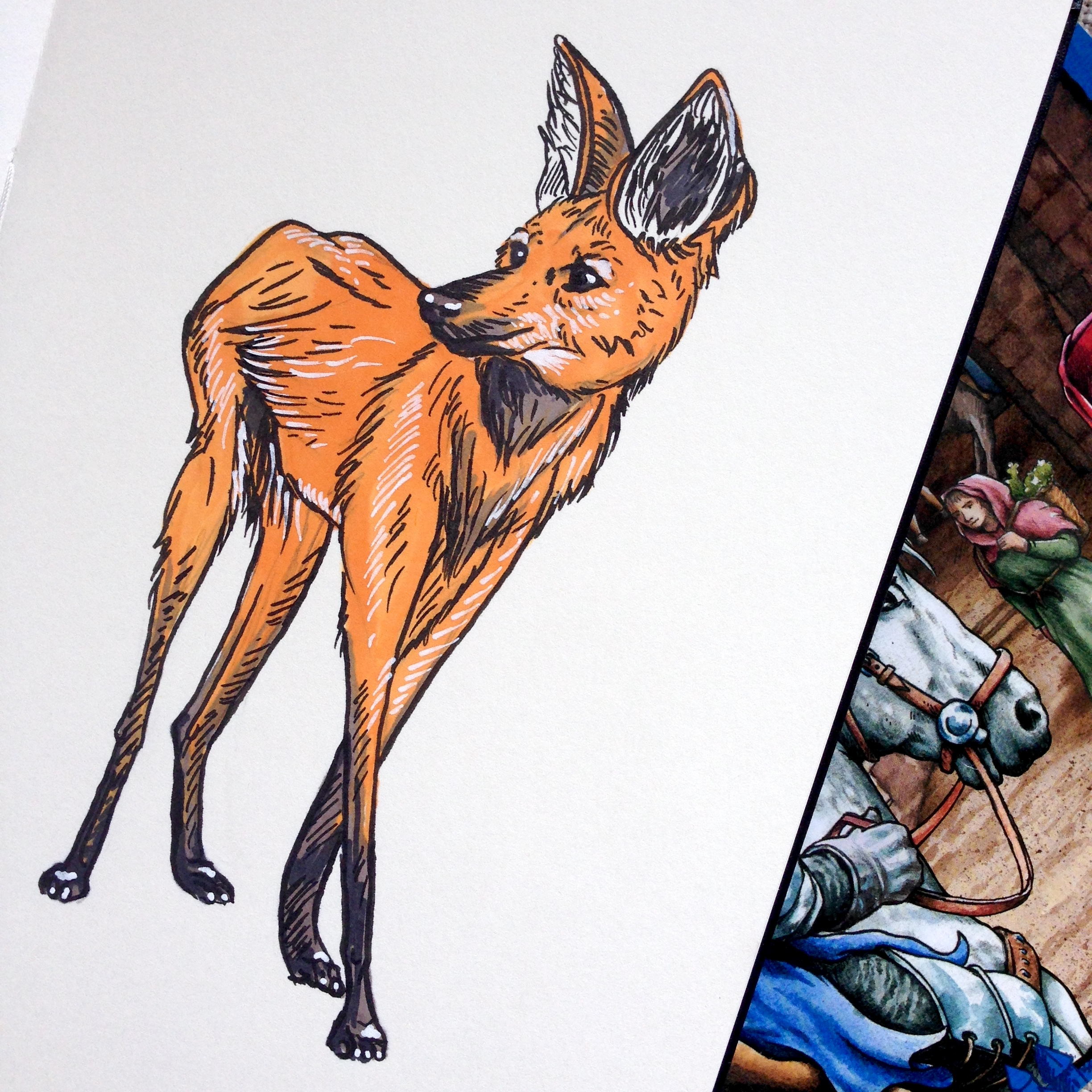 Day Thirty - Maned Wolf