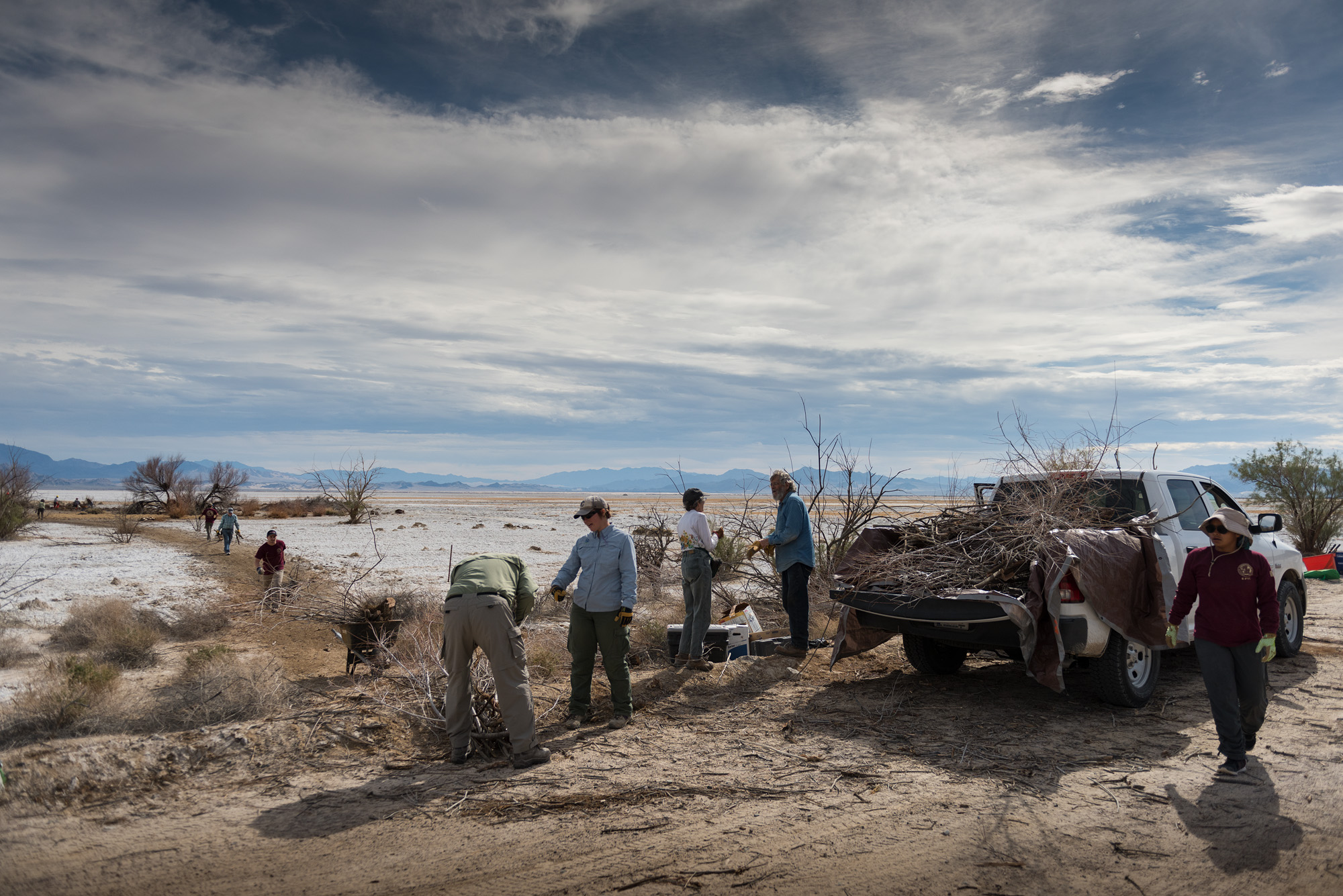 Volunteers and NPS personnel remove invasive tamarisk at Soda Dry Lake in the Preserve. The tamarisk can have a harmful impact on groundwater that feeds natural desert springs. Habitat restoration is just one of many functions that could take a hit with budget cuts. Photo by Michael Gordon