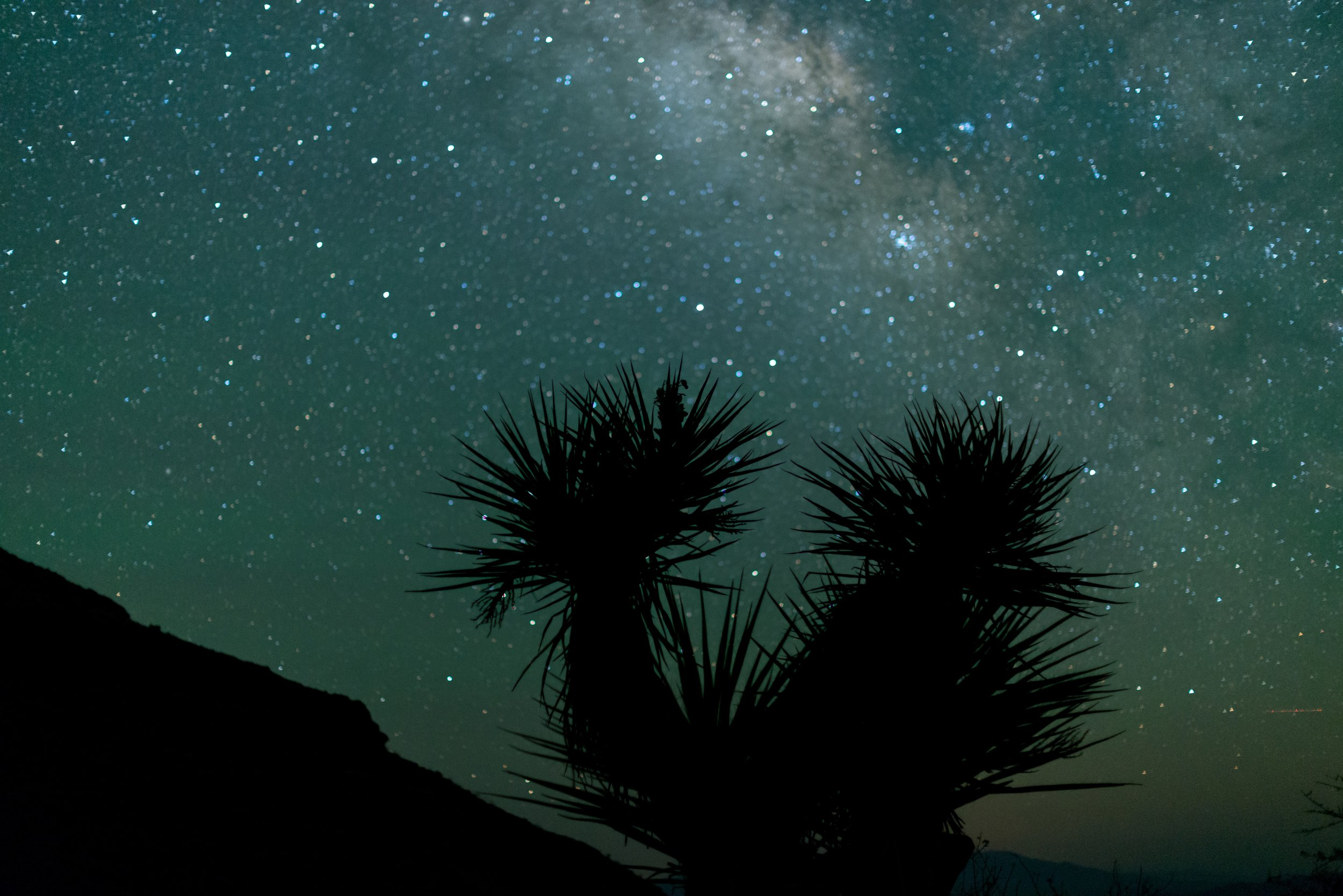 A silhouette of a Mojave yucca against the Milky Way.