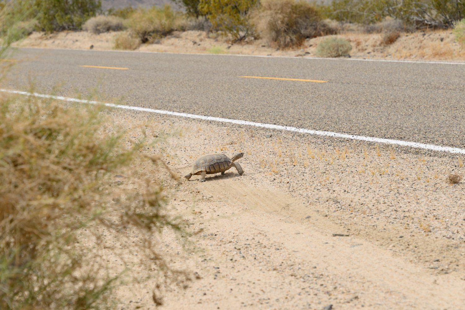 If you're going 75 MPH, you're not in the right mindset to enjoy the desert.  Slow down.  You'll enjoy the Preserve, and you'll pose less of a hazard to wildlife.