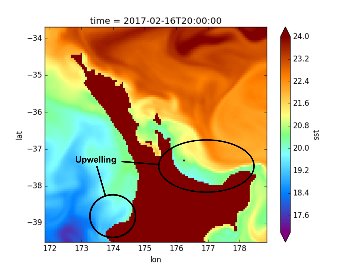 The westerly winds result in upwelling along north-facing coastlines.