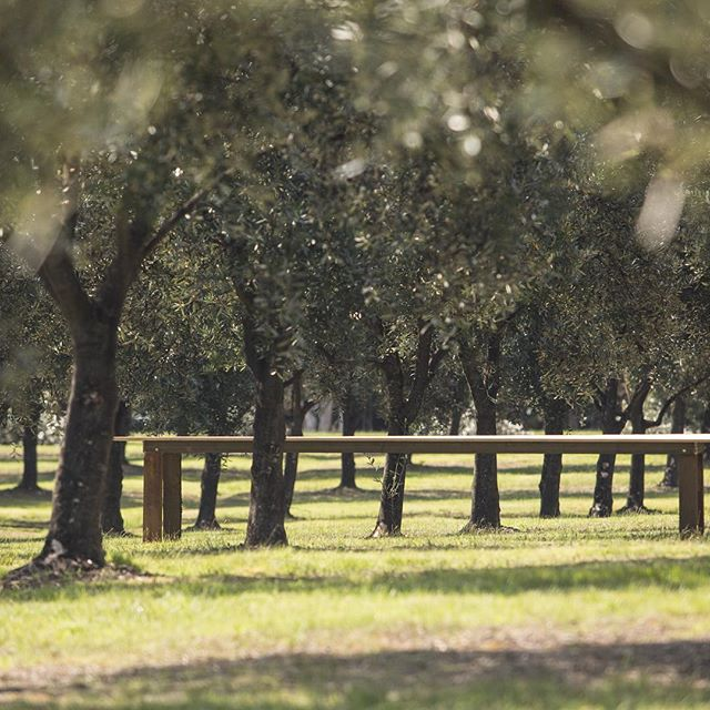 Our glorious grove, such a special place x⠀ #olivegrove