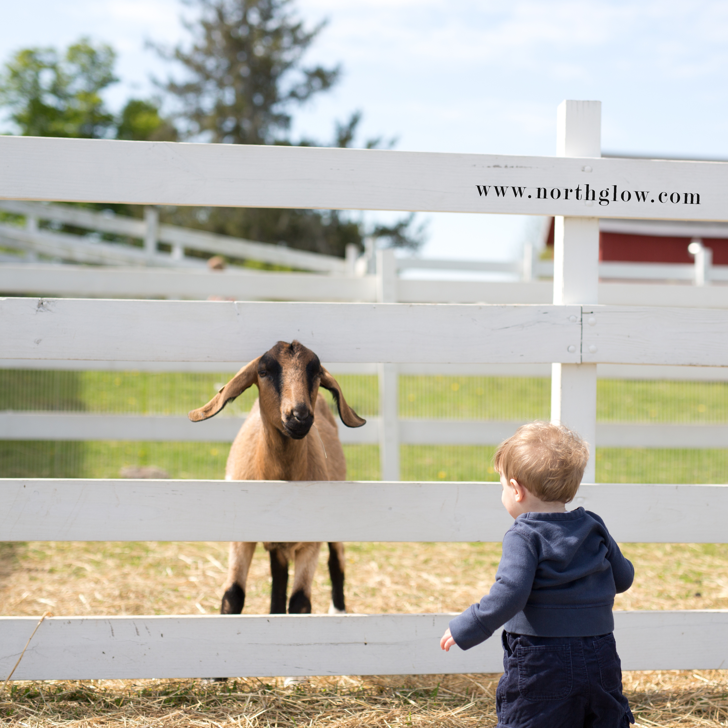 Springdale Farm | NorthGlow Photography