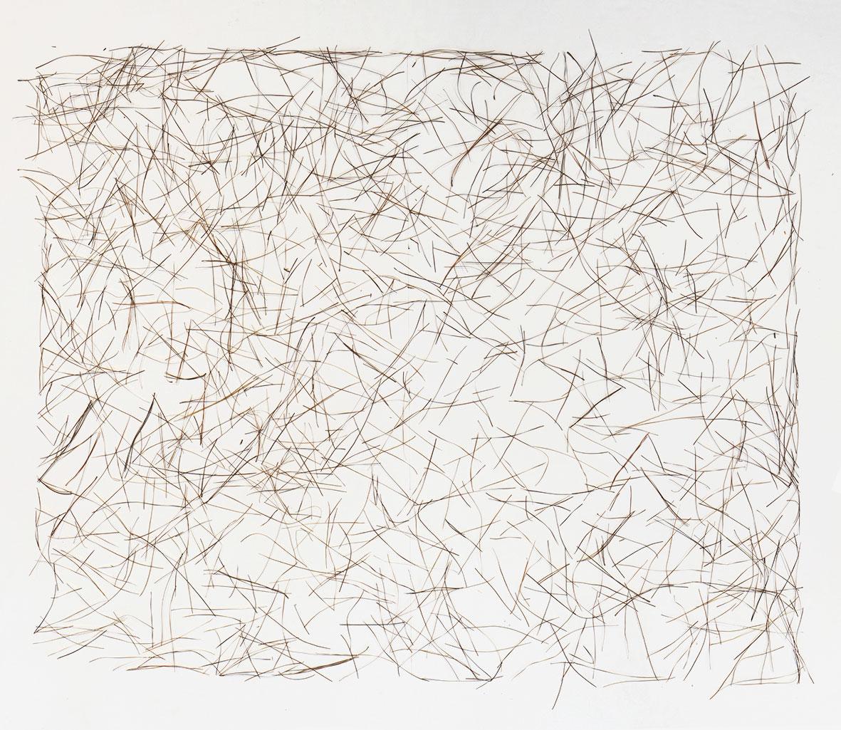 Choreographies 2016. Pine needles drawing. Digital print.