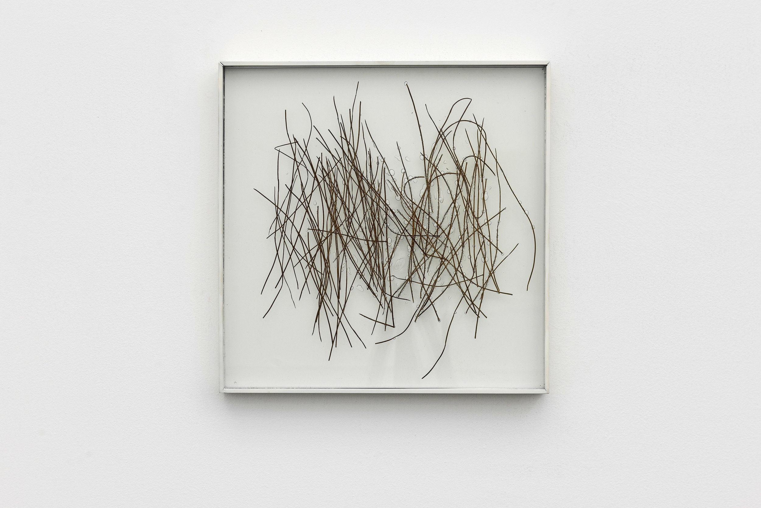 "Untitled 2015. Pine needles inserted in glass. 40cmx40cm (15,7"" x 15,7"")."