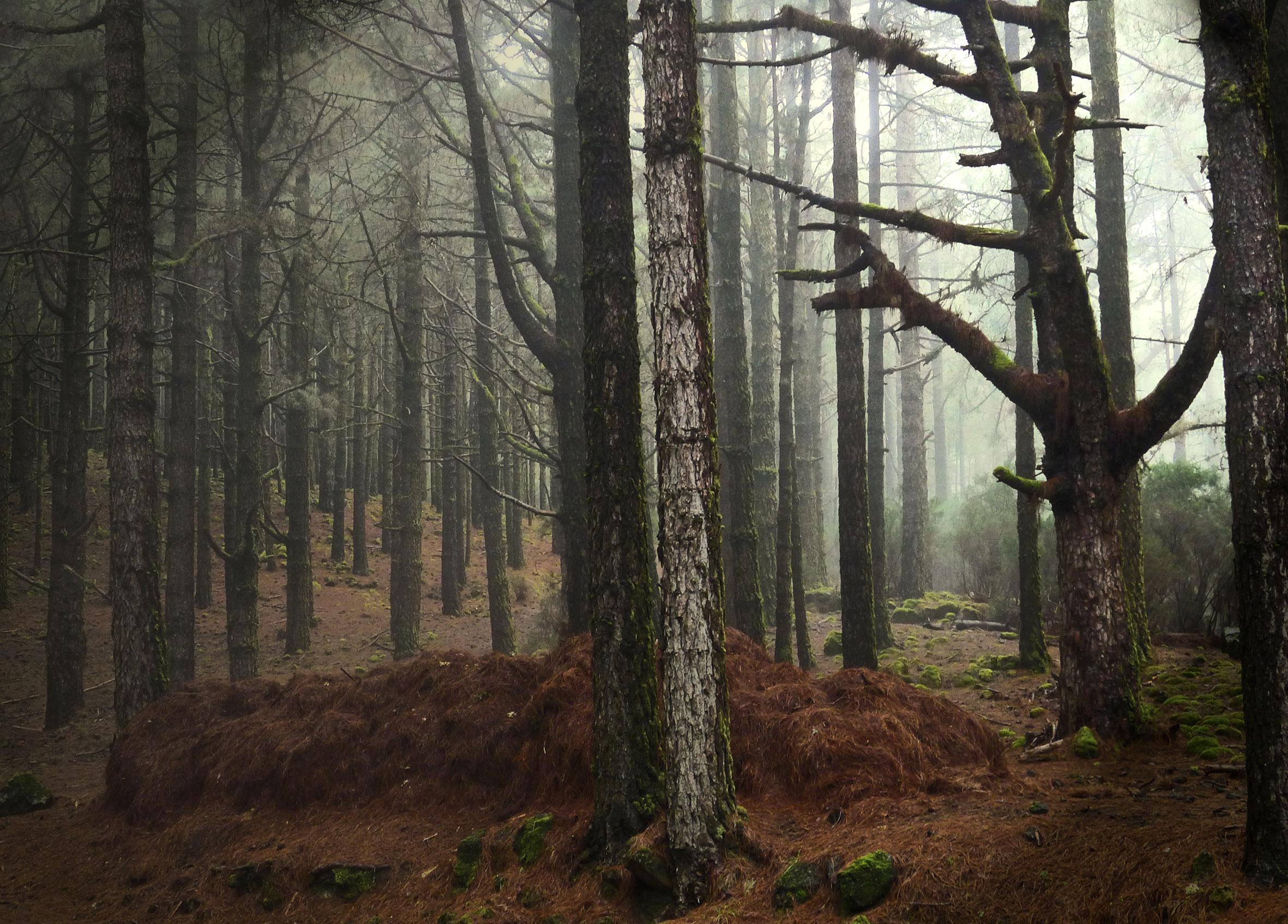 The woods, 2016. Digital print.