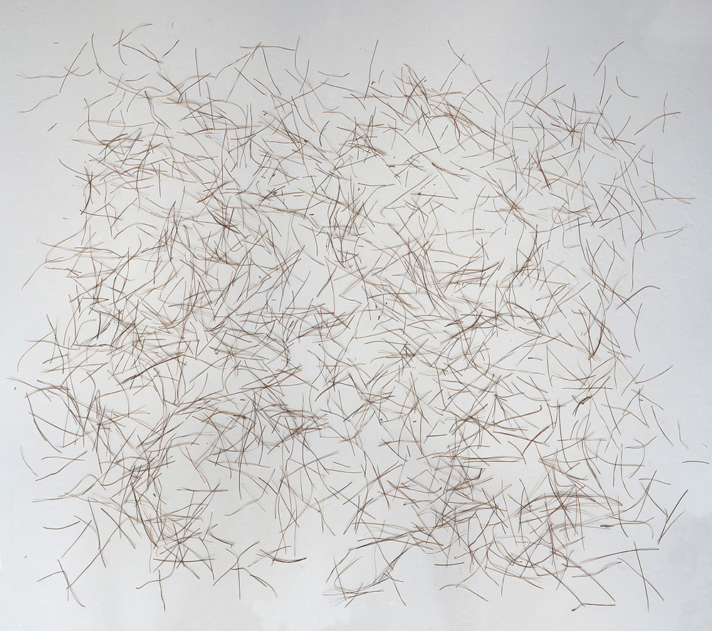 Choreographies 2016. Pine needles drawing. Digital print.
