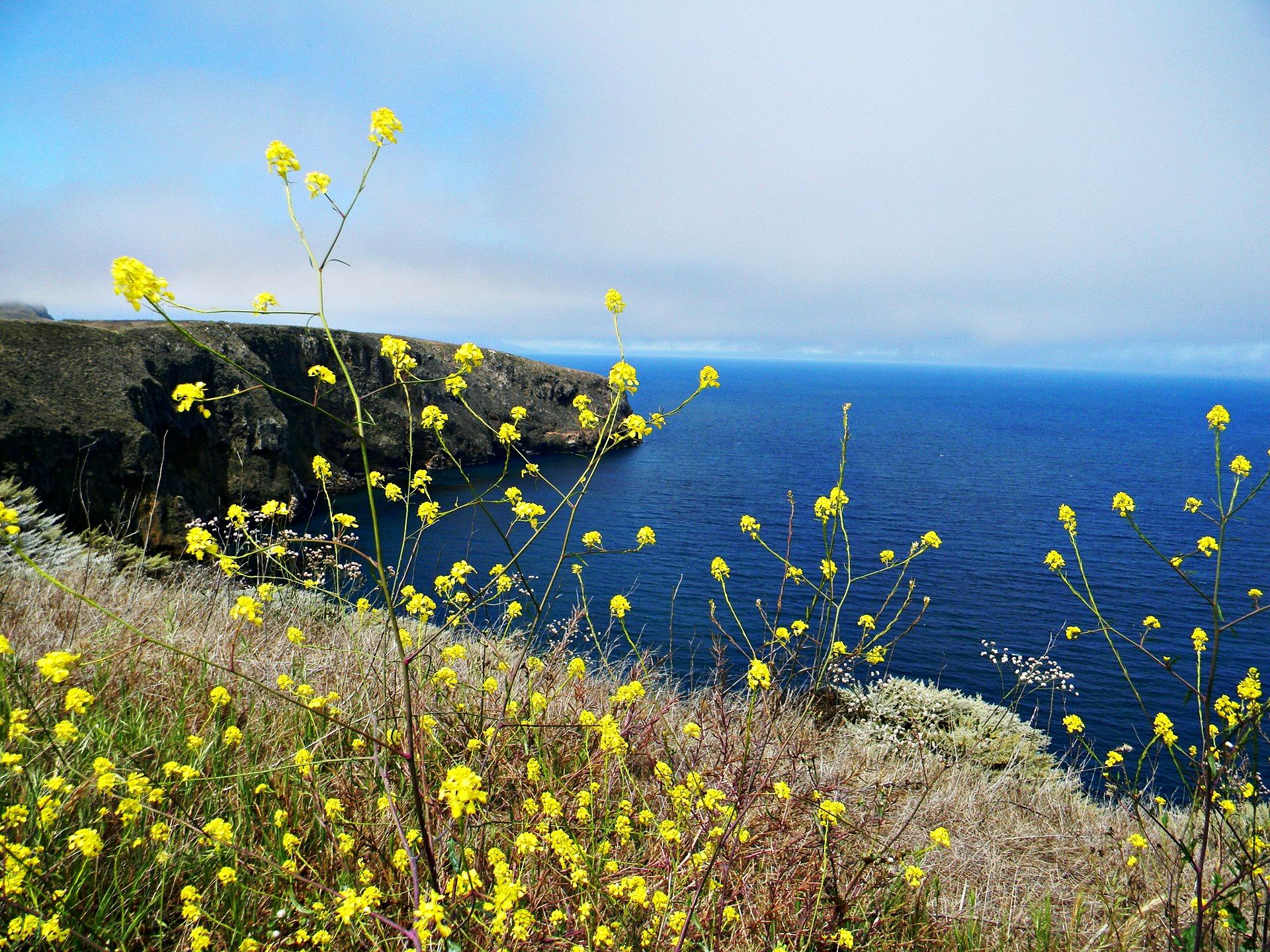 channel-islands-national-park-santa-cruz-cliff