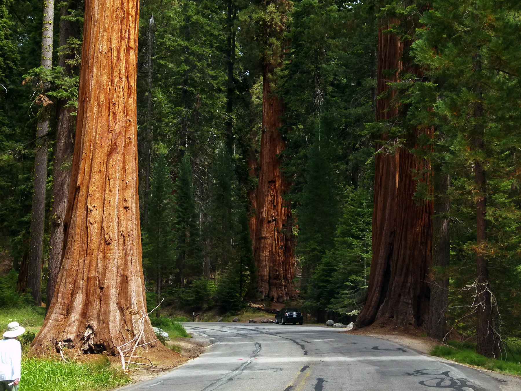 day-trip-sequoia-kings-national-park-california
