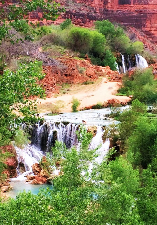 new-navajo-falls-havasupai-trail-hiking
